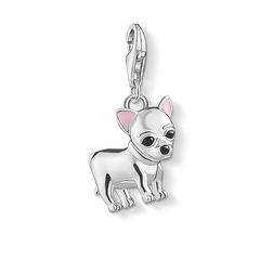 Charm pendant Chihuahua from the  collection in the THOMAS SABO online store
