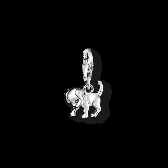pendentif Charm chiot de la collection Charm Club dans la boutique en ligne de THOMAS SABO